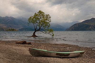 Wanaka Tree in Neuseeland - p470m2082318 von Ingrid Michel