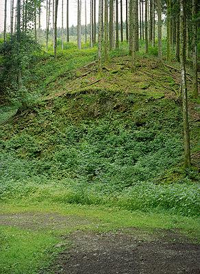 Schwarzwald - p6060176 von Iris Friedrich