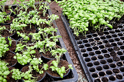 Gardening - p748m792439 by Dirk Brömmel