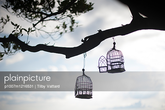 Offene Vogelkäfige an einem Baum - p1007m1216531 von Tilby Vattard