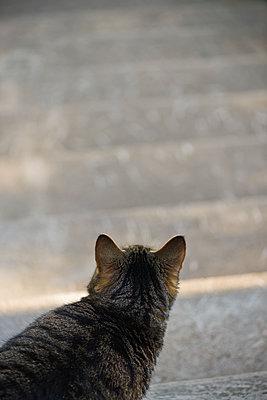 Rear view of vigilant cat - p1418m1571684 by Jan Håkan Dahlström