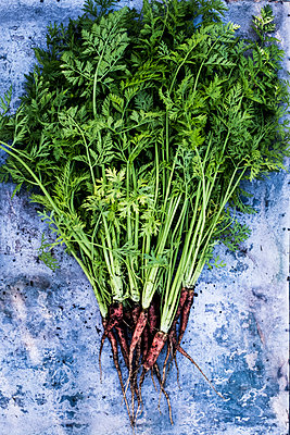 High angle close up of a bunch of freshly picked carrots on grey background. - p1100m2164838 by Mint Images