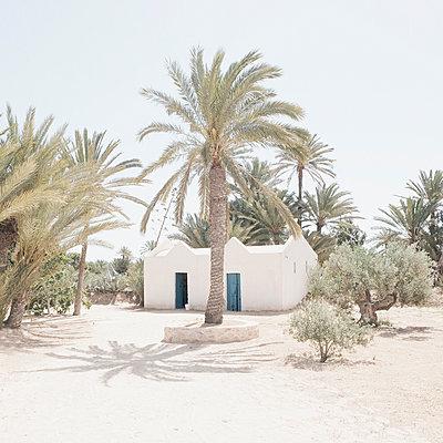 Oasis - p1105m1563482 by Virginie Plauchut