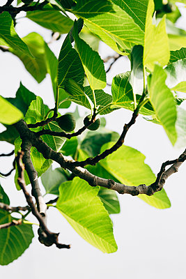 Twigs with leaves - p312m2078775 by Peter Westrup