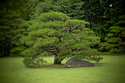 Japanese Garden - p445m911850 by Marie Docher