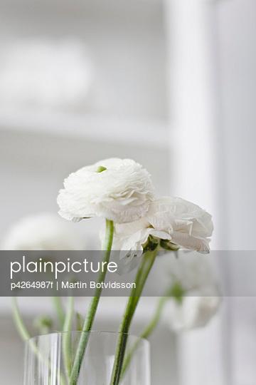 White flower in window