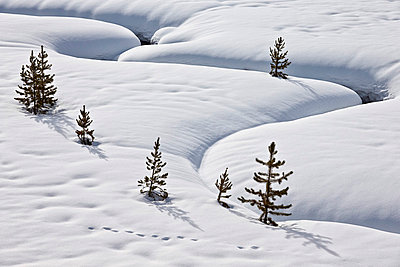 Evergreen trees in the snow with a meandering stream, Grand Teton National Park, Wyoming, United States of America, North America - p871m975935f by James Hager