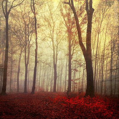 Germany, Wuppertal, scenic view of foggy forest - p300m2143535 by Dirk Wüstenhagen