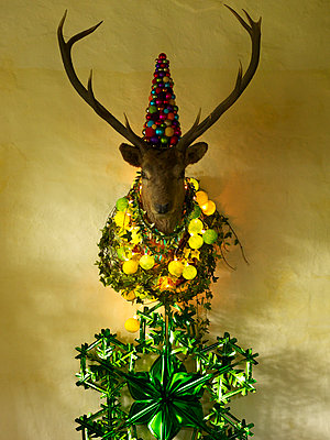 Deer's head crowned with baubles and garlands, Scotland, UK - p349m2167724 by Polly Wreford