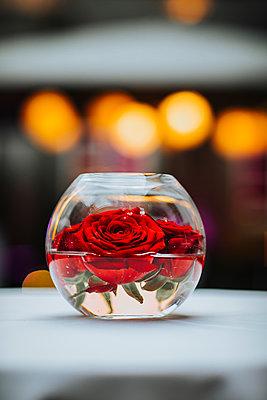 Rosen in einem Gefäß mit Wasser - p680m2176469 von Stella Mai