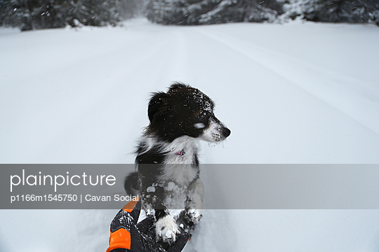 High angle view of dog sitting on snow covered field - p1166m1545750 by Cavan Social