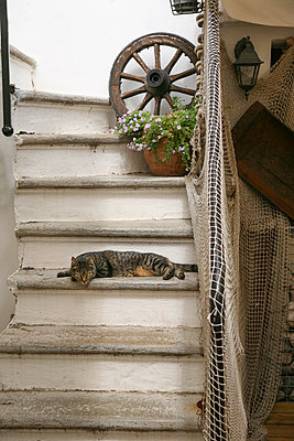 Cat on stairs - p375m1564623 by whatapicture
