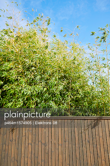 Zaun und Bambus - p464m1574905 von Elektrons 08