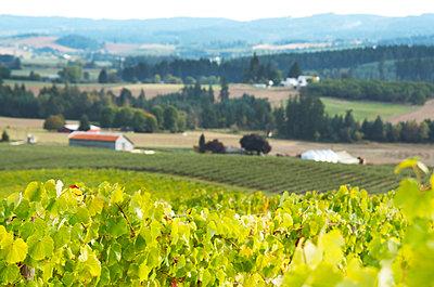 Winberge in Oregon - p632m1005368 von Sarah Henderson