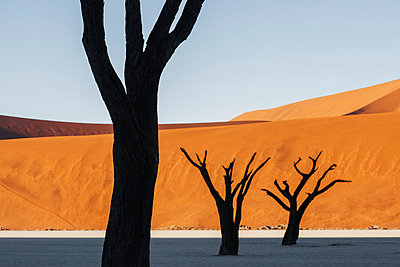 Deadvlei - p1065m885978 by KNSY Bande