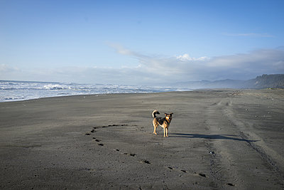 Dog standing at beach against sky during sunset at Redwood National and State Parks - p1166m1568709 by Cavan Images