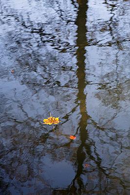 Autumn leaf floating on the water - p1682m2260714 by Régine Heintz
