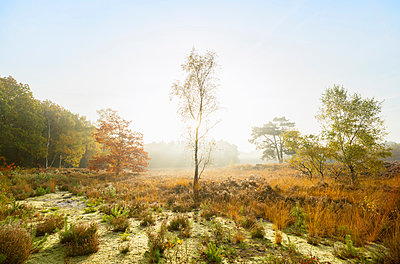 Nature reserve in the south of Holland, autumn morning, Noord-Brabant, Netherlands - p429m1224059 by Mischa Keijser
