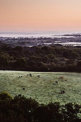 Weide am Morgen - p1326m2099800 von kemai
