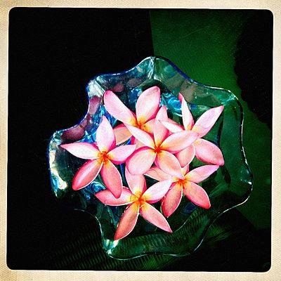 Blüten in einer Schale mit Wasser - p586m891095 von Kniel Synnatzschke