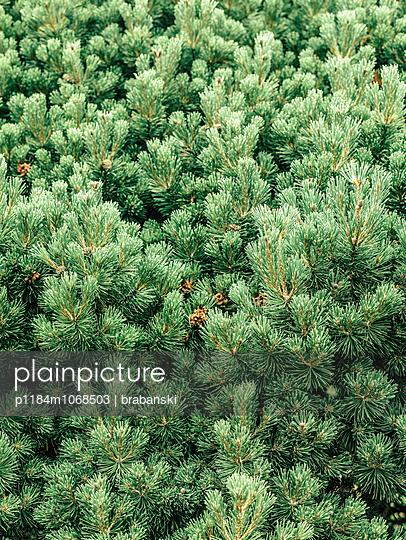 Botanic Garden - p1184m1068503 by brabanski