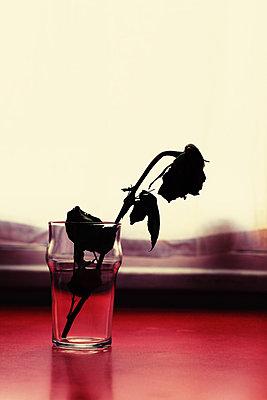 Verwelkte Rose in einem Glas - p1189m1222217 von Adnan Arnaout