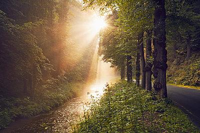 Nationalpark Sächsische Schweiz  - p1200m1171169 von Carsten Görling