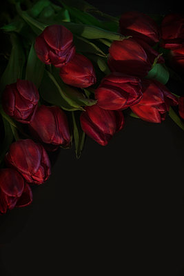 Tulip - p647m1119952 by Tine Butter