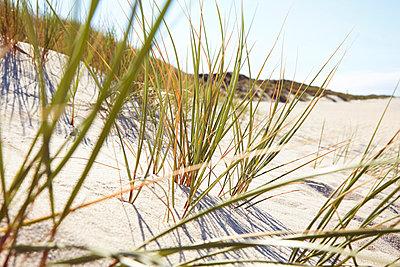Beach grass - p1198m1002979 by Guenther Schwering