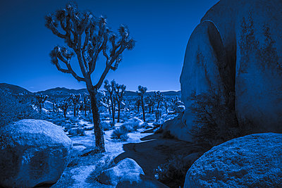 Joshua Tree National Park - p1275m1511146 von cgimanufaktur