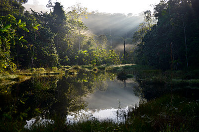 Brazil, Para, Amazon rainforest, pond in the morning - p300m1130117f von Florian Kopp