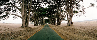 Tree-lined empty country road, California, USA - p3012219f by fStop
