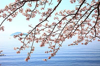 Takashima, Shiga Prefecture - p307m727143f by Seigo Yamamura