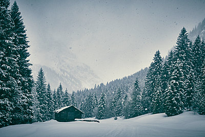 Mountain shelter in snow-capped coniferous forest - p851m1573524 by Lohfink