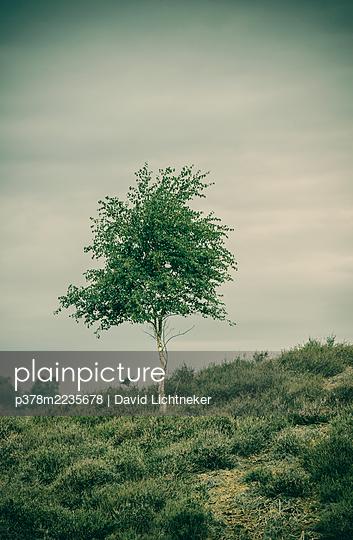 Tree on hill - p378m2235678 by David Lichtneker