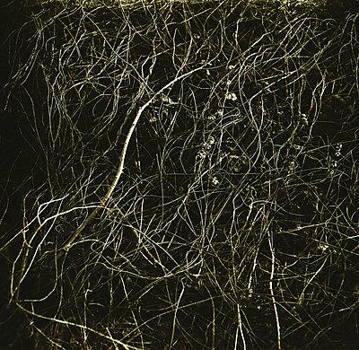 Interwined branches - p1648m2260198 by KOLETZKI