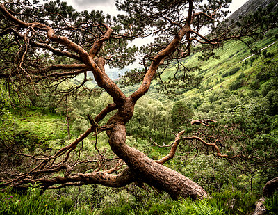 Windworked Tree - p1154m1162680 by Tom Hogan