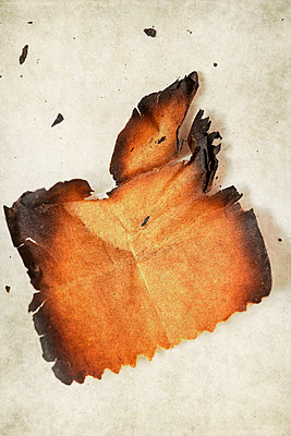 Burnt Paper - p1248m2125844 by miguel sobreira