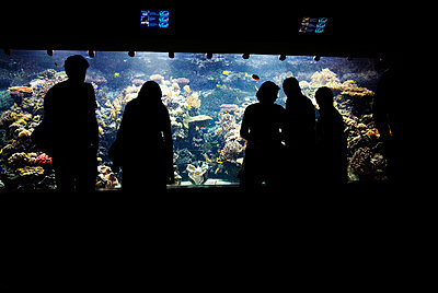 People watching life underwater - p5390019 by ebba