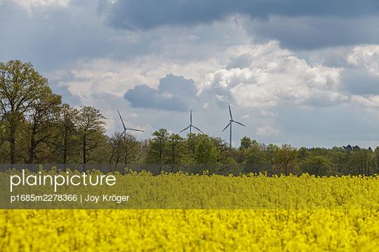 Rape field - p1685m2278366 by Joy Kröger