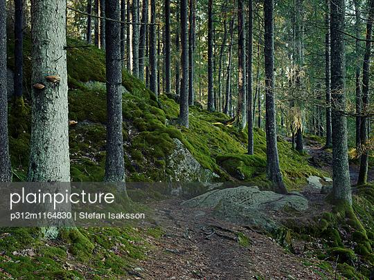 p312m1164830 von Stefan Isaksson