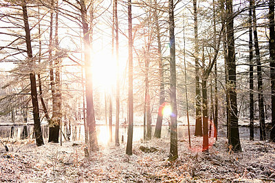 Sun shining in snowy forest - p429m664752 by Hugh Whitaker
