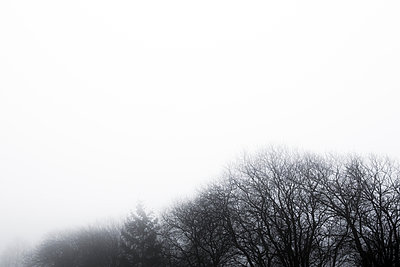 Trees in misty scenery - p1057m1034307 by Stephen Shepherd