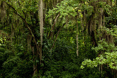 Spanish Moss - p1291m1424681 by Marcus Bastel
