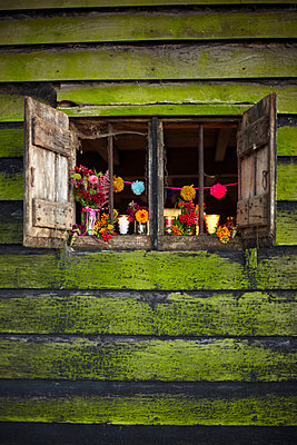 Open shutters of rustic wood cabin with cut flowers in Autumn  UK - p349m2167839 by Sussie Bell