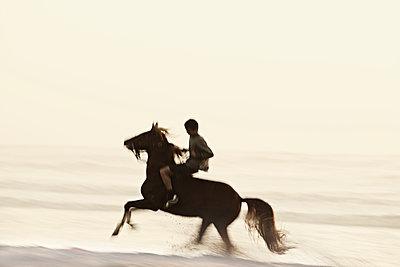 wild Horse - p587m1055231 von Spitta + Hellwig