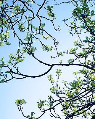 Frühling am Baum - p606m1573165 von Iris Friedrich