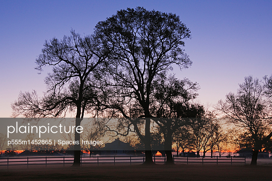 Trees and Fence in the Mist - p555m1452865 by Spaces Images