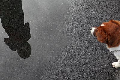 Hund starrt - p1082m833777 von Daniel Allan
