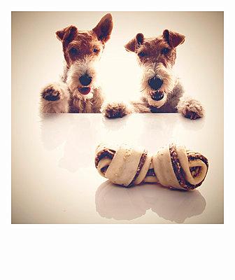 Dog eat dog - p5870225 von Spitta + Hellwig